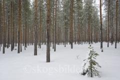 skog21